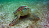 Private Tour: Akumal Marine Turtle Snorkeling and Cenote Adventure, Cancun, Private Sightseeing ...