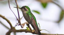 Private Tour: Bird Watching Cozumel Island, Cozumel, Private Sightseeing Tours