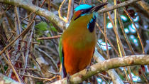 Private Tour: Bird Watching from Cancun, Cancun, Nature & Wildlife