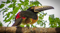Private Tour: Bird Watching from the Riviera Maya, Playa del Carmen, Nature & Wildlife