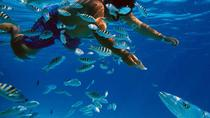 Snorkeling and Beach Club Access in Cozumel with Lunch, Cozumel