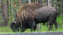 Private Full-Day Grand Teton Wildlife 4WD Tour from Jackson Hole, Grand Teton National Park, Day ...