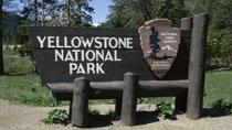 Yellowstone Upper Loop Self Guided Driving Tour from Jackson Hole, Jackson Hole, Day Trips