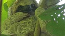 Sloth Watching Trail, La Fortuna, Cultural Tours