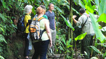 Day Trip to Monteverde Cloud Forest, Liberia, Day Trips