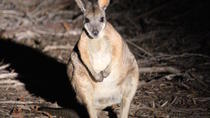 Small-Group Kangaroo Island 4WD Night Tour, Kangaroo Island, Night Tours