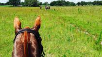 Adventurous Trail Horseback Riding Experiences, Sarasota, Horseback Riding