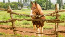 Equine Experience, Hawaii, Horseback Riding