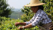 Individual Tailor-made Tour:A Taste of Tea & In Depth Chinese Tea Journey, Dali, Private...