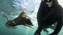 Seal Snorkeling with Animal Ocean, Cape Town, Other Water Sports
