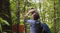 Programa 4 días Ayahuasca Místico Mishana Selva Amazonica, Iquitos, 4WD, ATV & Off-Road Tours