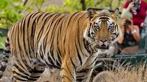 Historical Jaipur and Wildlife of Ranthambore National Park 3 days private tour, Jaipur, Attraction...