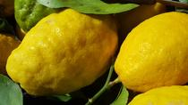 Limoncello Making and lunch with lemon base, Positano, Food Tours