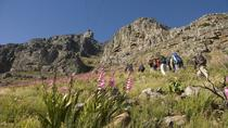 Privéwandeltocht over de Tafelberg, Cape Town, Hiking & Camping