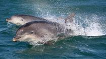 Dingle-Tour und Bootstour zum Delfin Fungie ab Killarney, Killarney, Day Trips