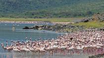 Lake Nakuru National Park- Guaranteed Departure Day Trip from Nairobi, Nairobi, Airport & Ground...