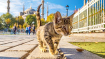7-Day Istanbul Welcome Card for Walking Tours, Transport and Bosphorus Cruise , Istanbul, ...