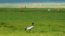 16-Day Private Trip: Birding at the Edge of the Tibetan Plateau from Lanzhou, Lanzhou, Multi-day ...