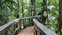 2-Day Cinco Ceibas Rainforest Tour from San Jose, San Jose, Multi-day Tours