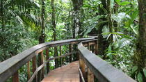 Cinco Ceibas Rainforest Reserve Bird Watching Tour from San Jose, San Jose, Nature & Wildlife