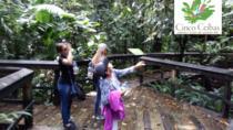 Cinco Ceibas Rainforest Reserve Bird Watching Tour from San Jose, San Jose, Day Trips