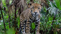 Belize Zoo and Baboon Sanctuary Tour from Belize City, Belize City