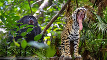 Belize Zoo and Baboon Sanctuary Tour from Belize City, Belize City, Half-day Tours