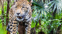 Belize Zoo and the Museum of Belize Tour, Belize City, Zoo Tickets & Passes