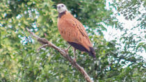 Birding by Boat Cruise at Crooked Tree Wildlife Sanctuary from Belize City, Belize City, Day Trips