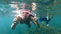 Manly Snorkeling Tour and Nature Walk, Sydney, null
