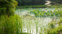 Flora Wisdom of Laos, Luang Prabang, Day Trips