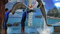 Pattaya Dolphin World Admission Ticket, Pattaya, Theme Park Tickets & Tours