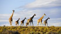 Big 5 Safari Day Tour from Cape Town, Cape Town, Dolphin & Whale Watching