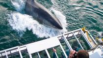 Great White Shark Cage Dive in Gansbaai, Hermanus, Adrenaline & Extreme