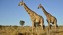 Half Day Safari from Durban, Durban, Cultural Tours