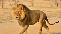 Half Day Safari from Durban (Min 2), Durban, Cultural Tours