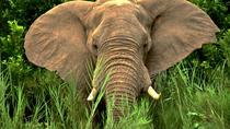 Hluhluwe Imfolozi 2 Days Safari, Durban, Cultural Tours
