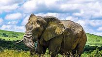 Hluhluwe Imfolozi Game Reserve Day Tour from Durban, Durban, Safaris