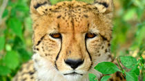 Hluhluwe Imfolozi Safari and Emdoneni Wild Cat Project Day Tour, Durban, Cultural Tours