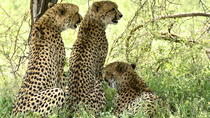 Hluhluwe Imfolozi Safari & Emdoneni Wild Cat Rehab Centre Day Tour, Durban, Cultural Tours
