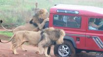 Mini Safari Tour from Durban, Durban, Day Trips