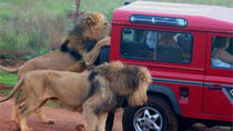 Safari and PheZulu Village Day Tour, Durban, Day Trips