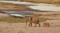6-7 Day Kruger National Park and Panoramic Safari from Johannesburg International Airport,...