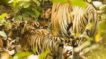 5 Day Private Tour of Delhi,Taj Mahal(Agra),Jaipur & Ranthambore National Park, New Delhi,...