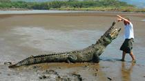 Crocodile Man Tour from Jaco, Jaco, Nature & Wildlife