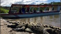 Crocodile Man Tour from Jaco, Jaco, Nature & Wildlife