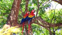 Private Tour: Carara National Park Bird Watching Tour, Jaco, Hiking & Camping