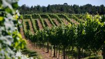 Half-Day Vinicola Araucaria Winery Tour from Curitiba, Curitiba, Wine Tasting & Winery Tours