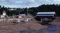 Fundy Coast to Fundy Shore Tour, Saint John, Half-day Tours