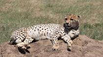 12 Days Safaris, Arusha, 4WD, ATV & Off-Road Tours